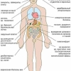 Диагностика паразитарная (гельминты, простейшие) и инфекции